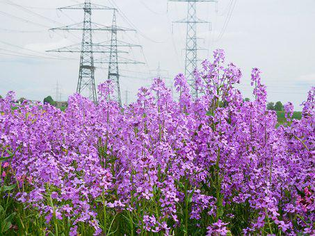 Magstadt, Flowers, Current, Energy, Electricity