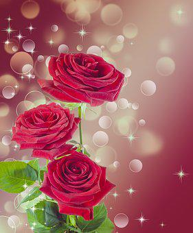 Rose, Flower, Red, Burgundy, Beautiful, Female
