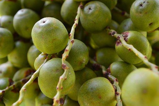 Butia, Fruit, Green