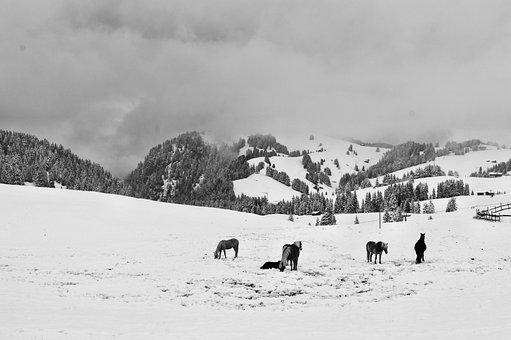 Alp Siusi, Snow, Horses, Winter, Mountain, Horse