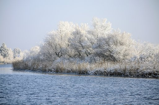 Lake, Winter, Frost, Cold, Water, Nature, Reed