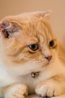 Ppt Backgrounds, Cat, Pets