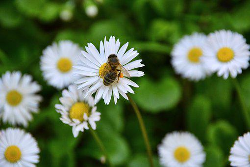 Flowers, Bee, Forage, Insects, Plant, Nature