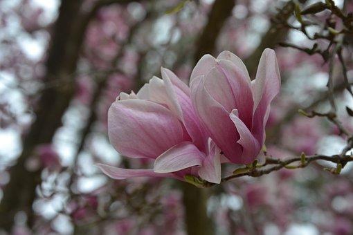 Tulips, Summer, Nature, Garden, Flower, Floral, Spring