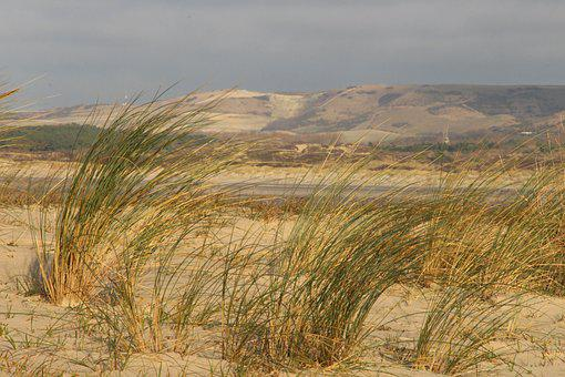 Oyats, Beach, Walk, Dunes, Panorama, The Touquet