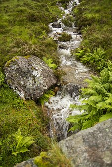 Brooke, Water, Stream, Nature, Natural, Green