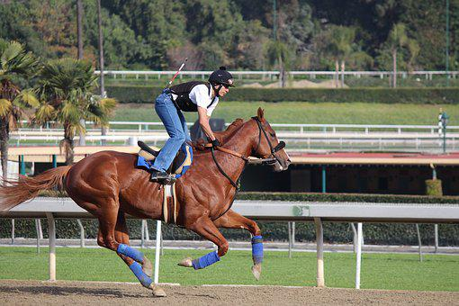 Jockey, Jockey On Horse, Breezing, Horseback