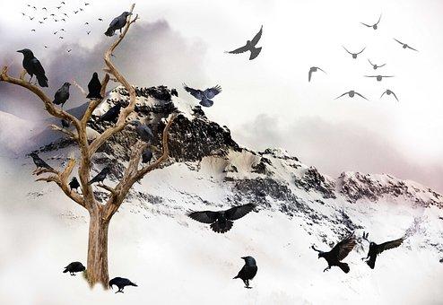 Birds, Crows, Black, Ravens, Wing, Wild, Murder