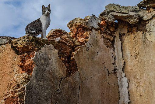 Cat, Feral, Wall, Damaged, Decay