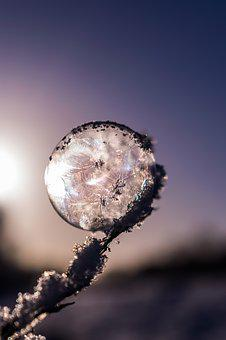 Soap Bubble, Frozen, Frozen Bubble, Winter