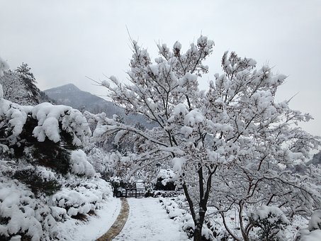 Snow, Snow Flower, Wood, Winter, Sky, Hambaknun