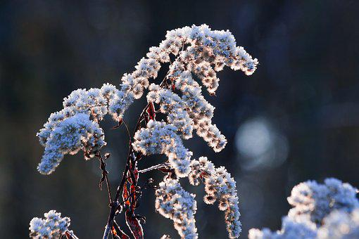 Hoarfrost, Frost, Winter, Nature, Frozen, Time Of Year