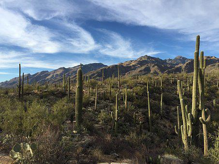 Saguaro Cactus, National Park, Desert, Landscape