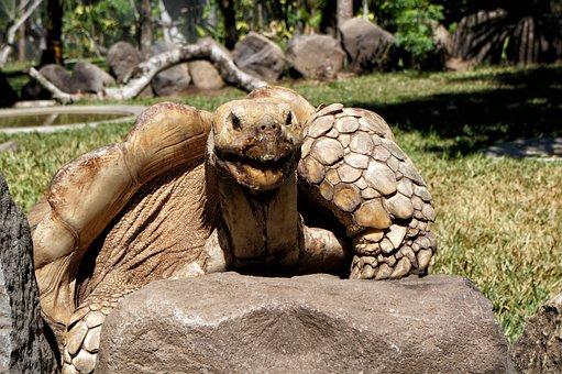 El Salvador, Giant Turtles, Giants, Reptile, Wild Life