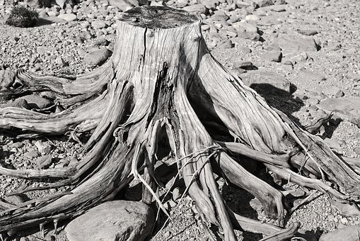 Riverbank, Trees, Wood, Dry, Roots