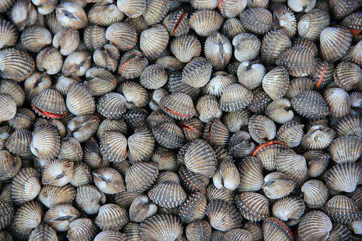 Thailand, Rayong, Cockles, Seafood