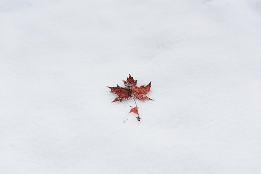 Winter, Maple, Minimalist, Simple, Ppt Backgrounds