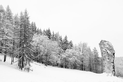 Poland, Winter, Snow, Landscape, Forest, Trees, Woods