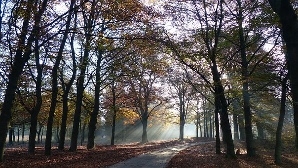 Autumn, Trees, Veluwe, Shelves Jerkin