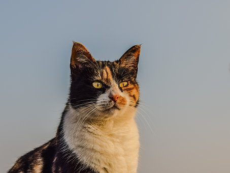 Cat, Stray, Animal, Portrait, Feline, Street, Face