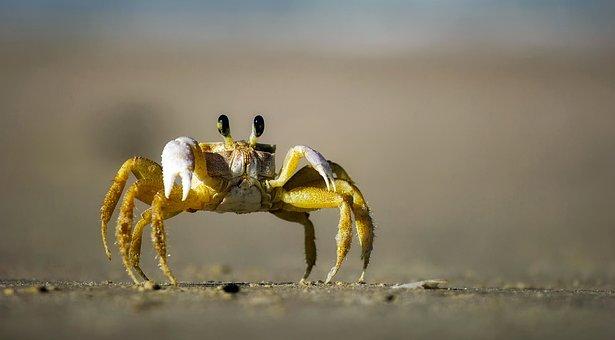 Crab, Beach, Sand, Macro, Closeup, Crawling, Eyes