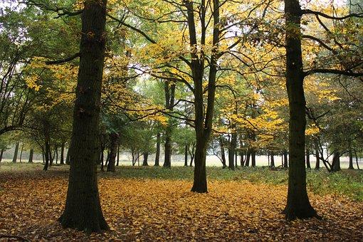 Tree, Autumn, Leaves, Nature, Season, October, Fall