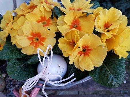 Spring, Primroses, Plant, Flowers, Spring Flowers