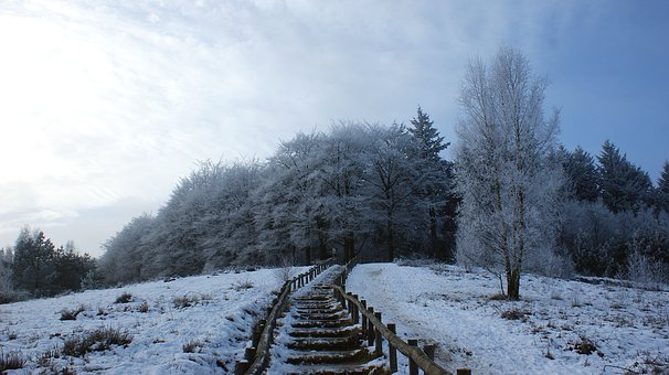 Forest, Trees, Snow Landscape, Walking Path, Trap, Ice