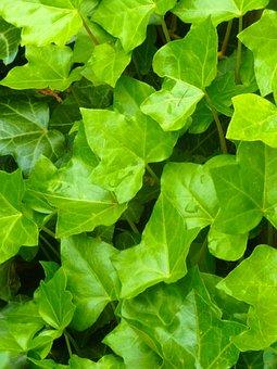 Evy, Garden, Summer, Green