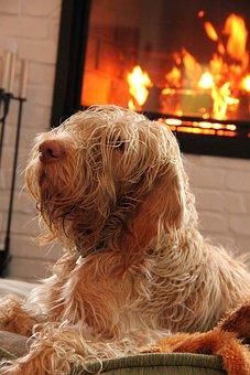Dog, Fire, Home, Hair, Comfort, House, Heat, Hot