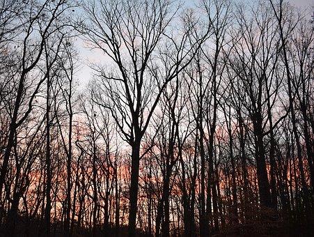 Sunrise, Winter, Trees, January, Colorful, Plants