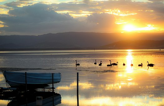 Boat, Lakeillawarra, Swan, Sunset, Relax, Tranquility