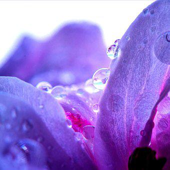 Nature, Flower, Plant, Pink Flower, Purple, Of Course