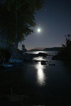 Night, Moon, Sky, Star, Night View, Night Sky, Tree