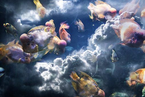 Fish, Clouds, Composition, Sea, Sky, Wave, Nature