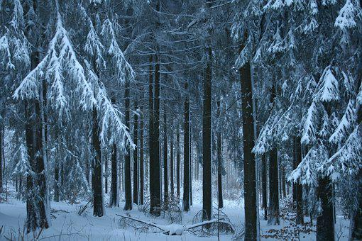 Wintry, Snow, Winter, Snowy, Cold, White, Nature