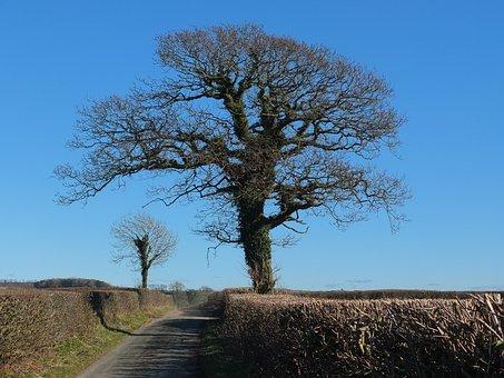 Tree, Ivy, Nature, Natural, Lane, Hedge, Landscape