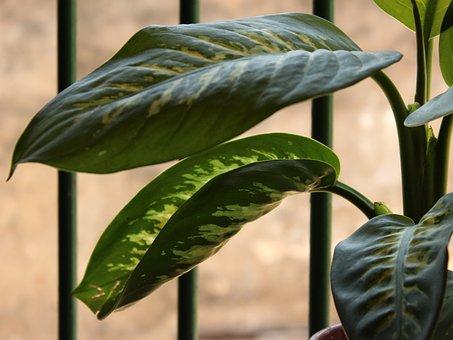 Plant, Leaves, Aningapara