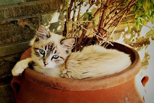 Kitten Looking At You, Beautiful Cat, Pet Portrait