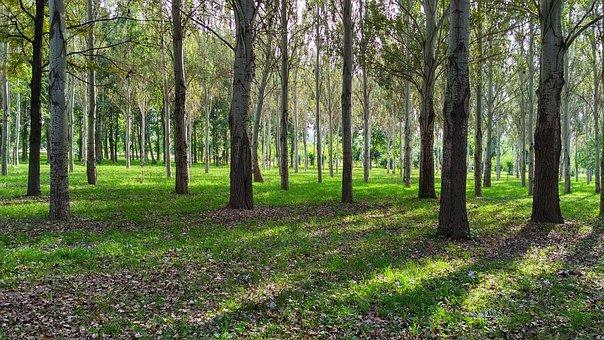 Forest, Tree, Sun, Bishkek