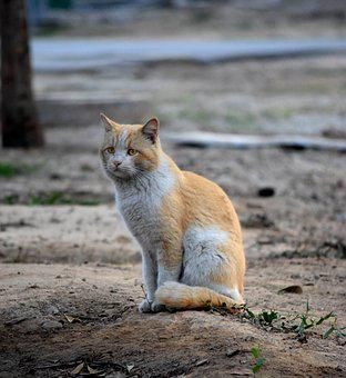 Cat, Cat Photography, Cat Quotes, Pet, Nature, Wild