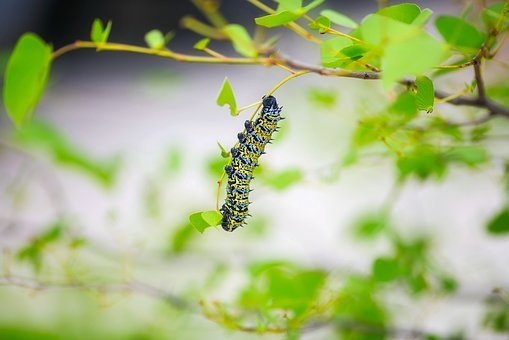 Caterpillar, Insect, Macro, Closeup, Bush, Leaves