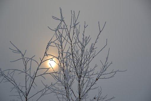 It's A Nasty Day, Sun, Sunrise, Dim, Fine Snow, Tree