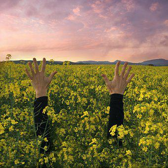 Hands, Sunset, Flowers, Reach Out, Celebrate
