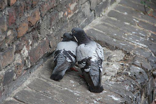 Pigeons, Love, Feeling, Valentine's Day, Romantic