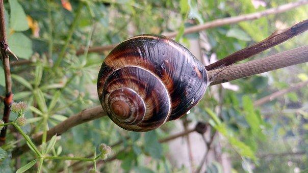 Snail, Zalenina, Nature
