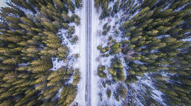 Forest, Road, Above, Aerial, Cold, Winter, Green