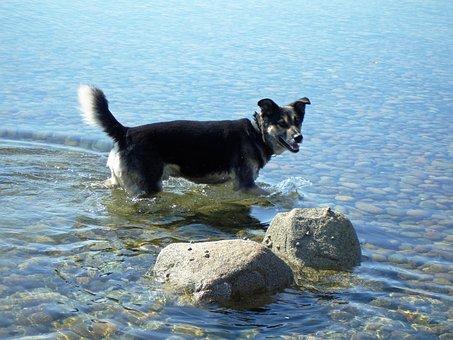 Dog In Water, Sea, Dog, Pet, Animal, Ocean, Beach