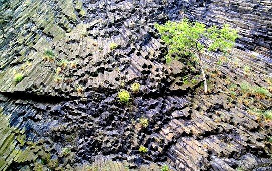 Rock, Basalt, Igneous Rock, Plants, Life