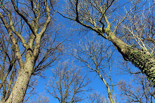 Trees, Blue Sky, Aesthetic, Blue, Sky, Kahl, Nature